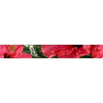Hibiscus listwa 6,5x50