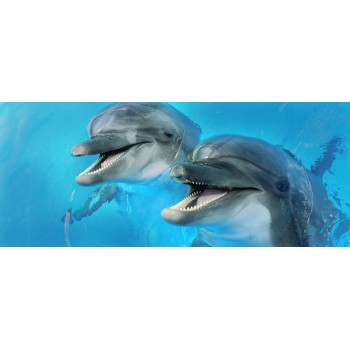 Dolphins 2 centro 25x60