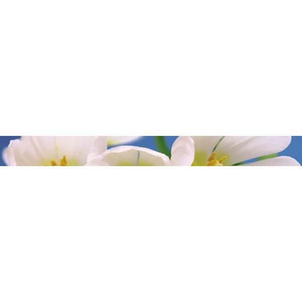 Blue Garden listwa 6x60