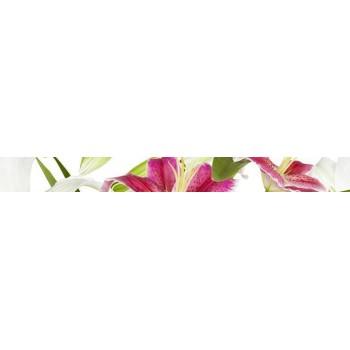 Lilium listwa 6x60